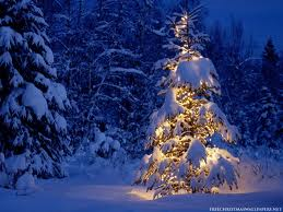 Christmas tree snow covered
