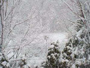 Snow in Minnesota 2010 November 2