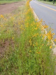 Flowers...wildflowers edge of road