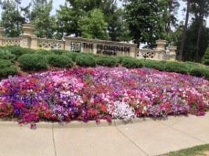 Promenade flowers
